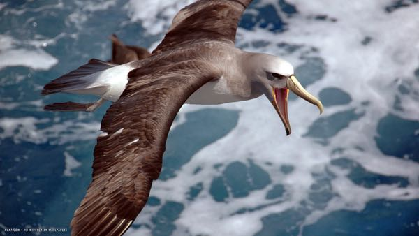 Ditching Physical Expectation in the Great 5D Shift - Finding Paradise Within Albatross%20-%201