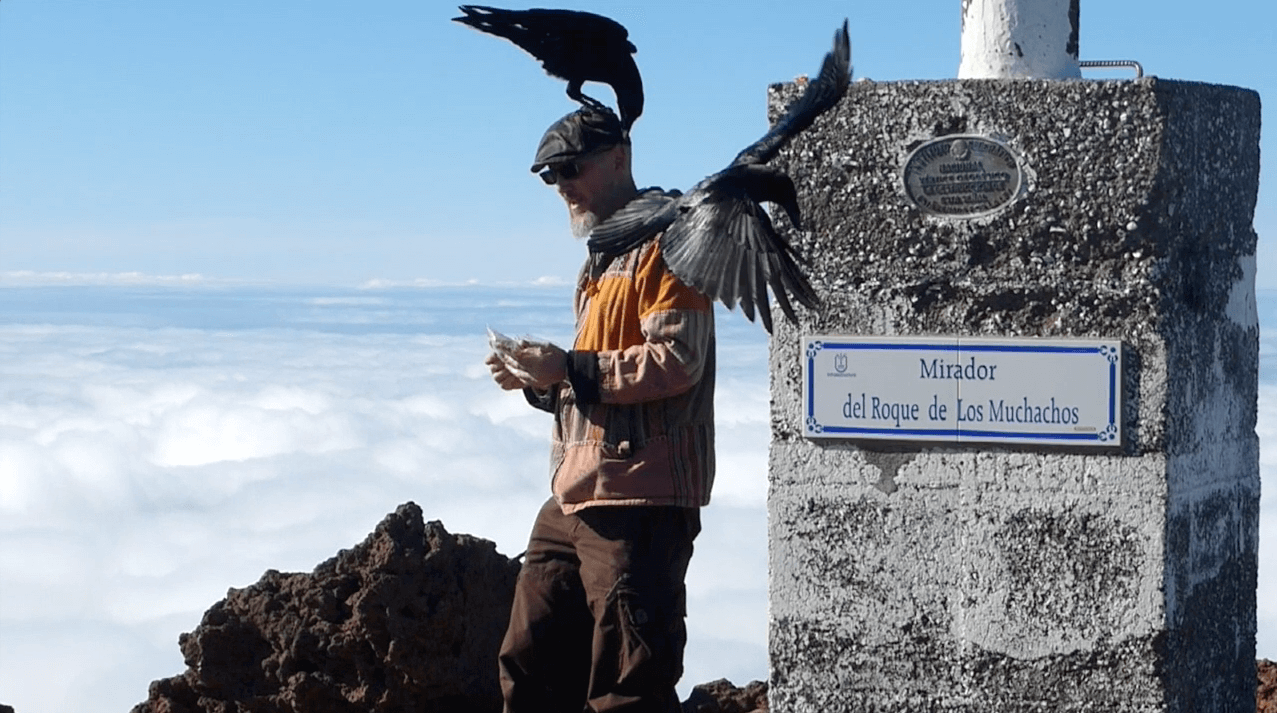 Ravens on the La Palma Volcano 2 with Openhand