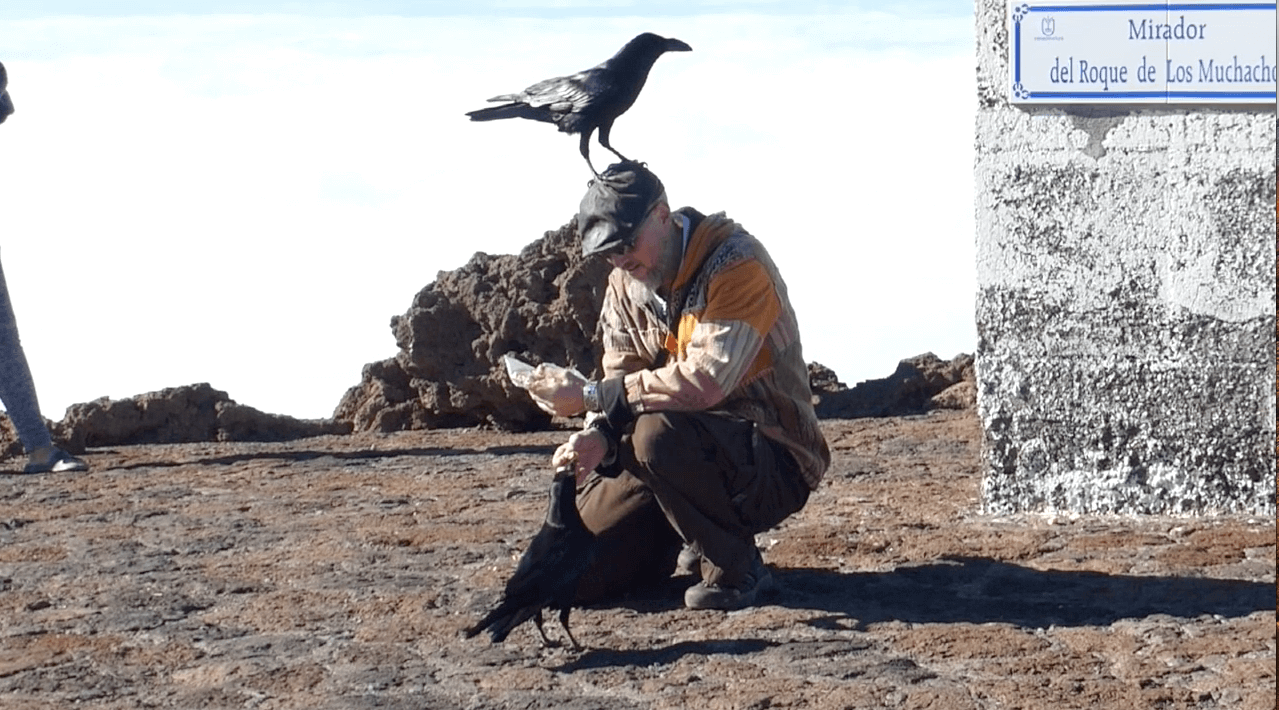 Ravens on the La Palma Volcano 3 with Openhand